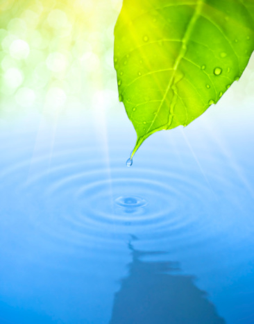 Leaf above Water
